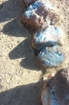 Rosamond blue rocks